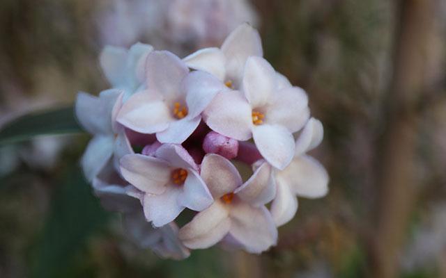 daphne bholua jacqueline postill crop