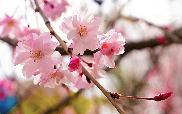 Springtide