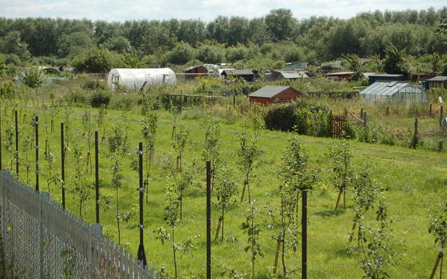 Cripley Orchard Allotment