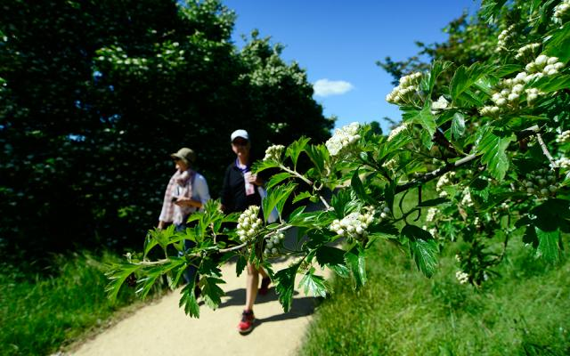Thorn Walk