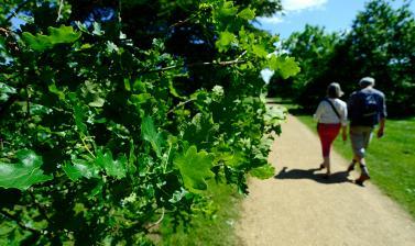 Oak Walk
