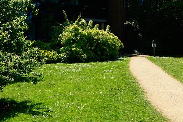 Genetic Garden path