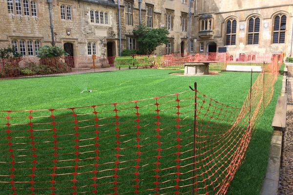 Image of newly laid green grass with a orange fence around it