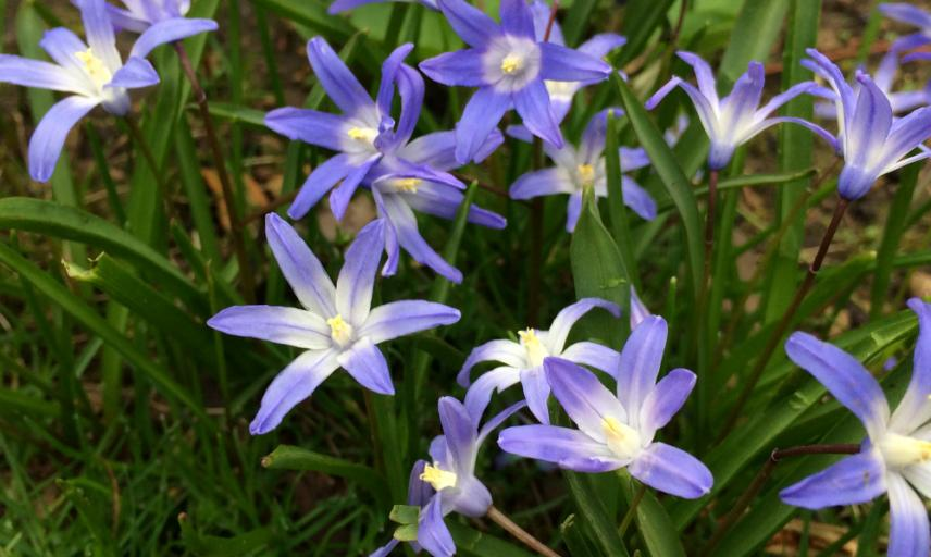 squill2 resize