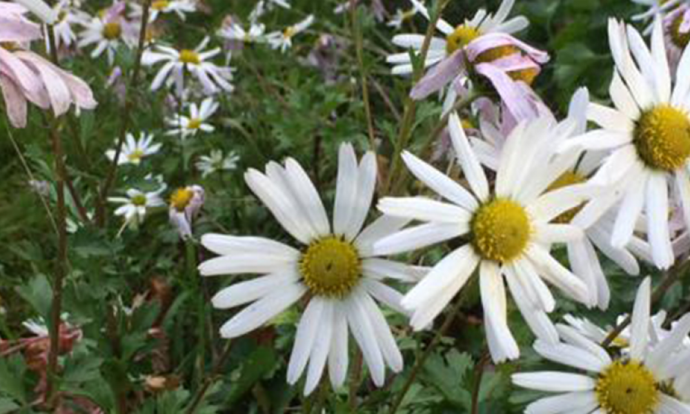 Plant of the week Oct 24