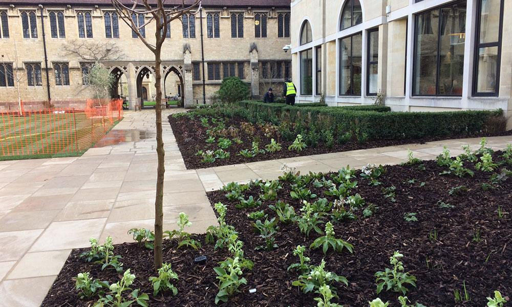 St Cross College landscaping - After